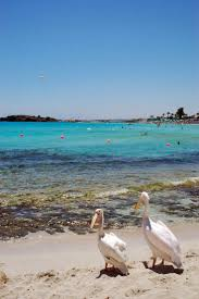 54 best diver training in protaras images on pinterest cyprus