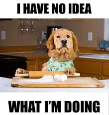 Dog Cooking Meme - find out what happens when a dog tries to cook funny