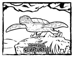coloring pages of animals in their habitats in their habitat coloring page u0026 poster combo volume 2
