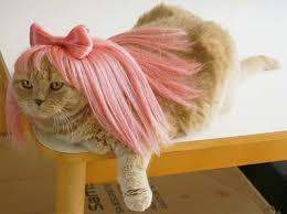 Kitten Halloween Costumes Pet 100 Cats Costumes Images Animals Happy