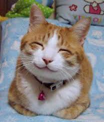 Smiling Cat Meme - so happy smiling cat http ift tt 1ojqaud cute