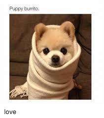 Burrito Meme - puppy burrito love burrito meme on me me