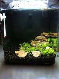Aquascape Filter Aquascape For The Nano Aquarium With Red Shrimps Shrimps