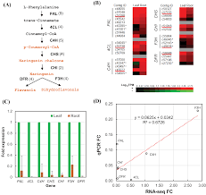 transcriptome analysis of polygonum minus reveals candidate genes