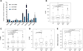 shaughnessy floor plan micrornas down regulate homologous recombination in the g1 phase