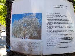 Abris De Jardin Cerisier by Bd Gambetta Un Grenoblois S U0027accroche à Un Cerisier