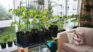 12 ways you can have an indoor garden 3 sold me loversiq