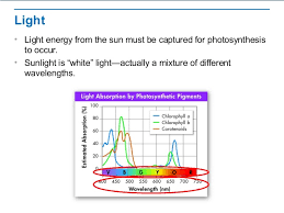 the absorption of light by photosynthetic pigments worksheet answers photosynthesis overview