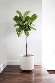 gorgeous indoor plant containers 31 indoor vegetable gardening