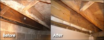 crawl space mold remediation mold removal
