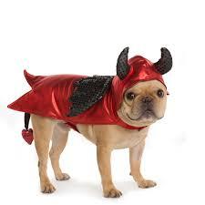 Halloween Costumes Bulldogs 40 Adorable Halloween Costumes Pet Holidaysmart