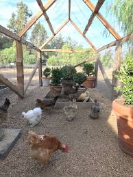 Chickens In The Backyard best 25 farmhouse garden ideas only on pinterest farmhouse