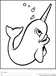drawn narwhal arctic animal pencil and in color drawn narwhal