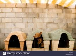 small house dogs three dogs together in a small dog house stock photo royalty free