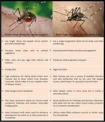 mosquitoes and the zika virus