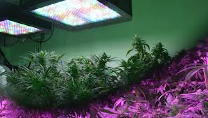 full spectrum grow light full spectrum led lights