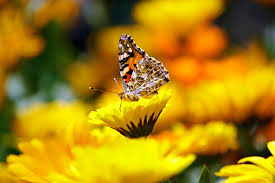 selective photo butterfly on yellow petaled flower during daytime
