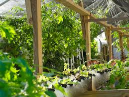 recirculating farms growing healthy fresh food and a new local