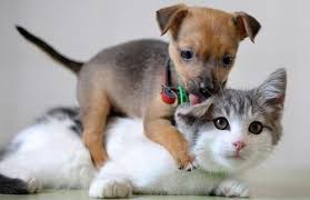 Pet Is Pet Insurance Worth It See If It U0027s Worth The Cost