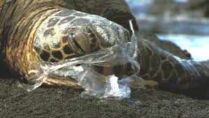 is it really worth the convenience 6 ways plastic is harming