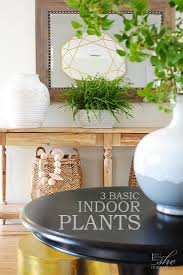 3 easy to care for houseplants