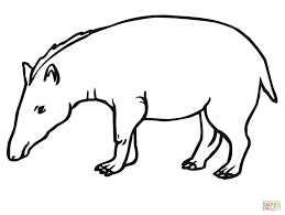 mountain tapir for coloring page animal drawings of tapir