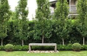 5 best feature trees kyora landscapes