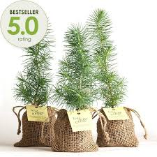 plant wedding favors pine tree plant favor burlap pouch at easternleaf junipers