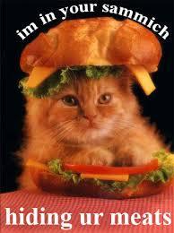 Sammich Meme - im in your sammich cat meme cat planet cat planet
