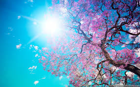 Beautiful Wallpapers Beautiful Spring Landscape Free Download Hd Wallpapers 16677