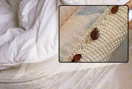 Bed Bugs In Mattress What Do Bed Bugs Look Like Can You See Them