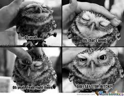 White Owl Meme - owls memes best collection of funny owls pictures