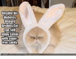 Diabetes Meme Wilford Brimley - 25 best memes about wilford brimley cat wilford brimley cat