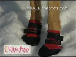 ultra paws dog boots for snow youtube