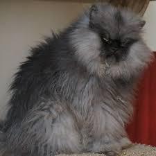 Colonel Meow Memes - colonel meow grumpy cat meme images