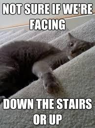 Crazy Cat Memes - ur cat on nip withdrawal just cat memes cuz they re fun