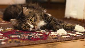 Cat Area Rugs Ensuring A Better Life For Your Area Rugs Intek Cleaning