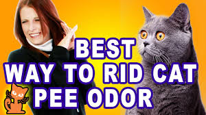 My Cat Peed On My Bed Get Rid Of Cat Smell Insider Secrets To Getting Rid Of Cat