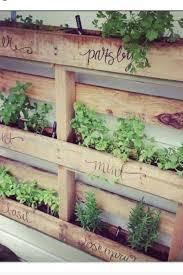 Wall Garden Planter by Best 25 Vertical Herb Gardens Ideas On Pinterest Wall Gardens
