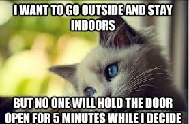 problem cat meme cat best of the funny meme