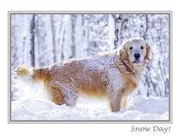 wildlife photography christmas cards chrismast cards ideas
