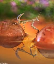 the peaceful meditations of a bug u0027s life macro photography