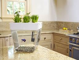 Fish Tiles Kitchen Back To The Roots Water Garden And Fish Tank Gadget Flow