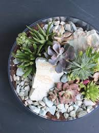 succulent facts how to make a tabletop succulent terrarium diy network blog