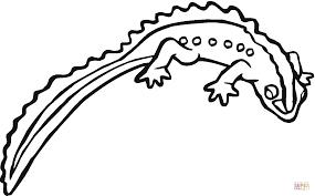 salamander 17 coloring page free printable coloring pages