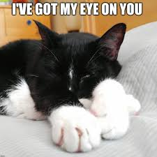 I Got My Eyes On You Meme - i ve got my eye on you cute animals pinterest eye funny cat