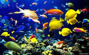 ocean life wallpapers 6804620 1920x1080 544 88 kb