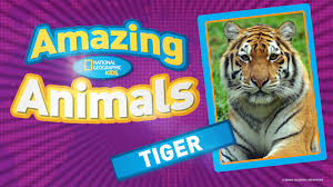 Kids U0027 Games Animals Photos Stories And More National