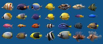 Types Of Aquarium Fish Saltwater Aquarium Fish List