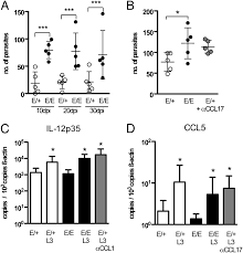 si e bain b ccl17 controls mast cells for the defense against filarial larval